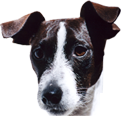 dog-ear-1